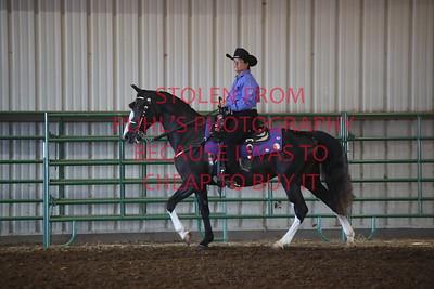 Class 3 Western Saddle Horse Pleasure - Adult