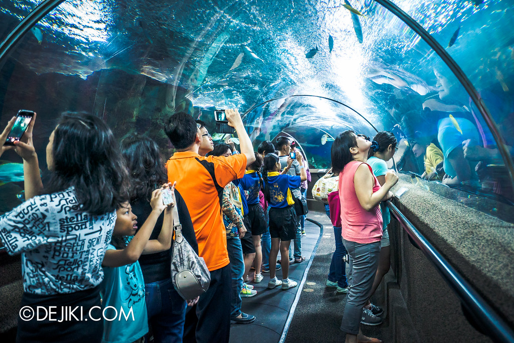 Underwater World Singapore - Tunnel guests taking photos