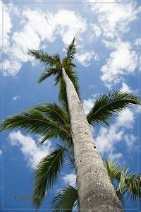 Punta Cana (Canon)