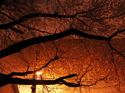 2006-04-11   The enchanted forest. Just a tree and a street light.  Nothing fancy here.