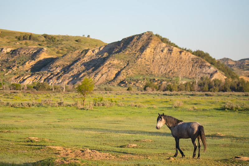 wild horse-3945.jpg