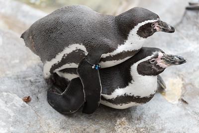 St Louis Zoo Feb 1 2015