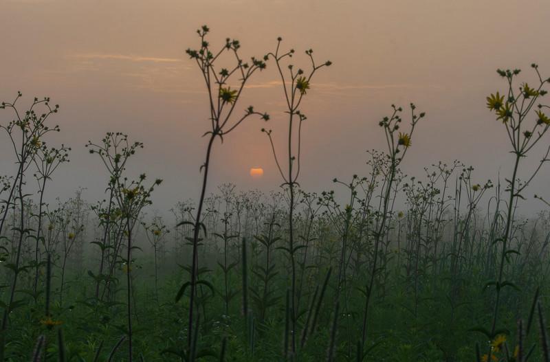 Sunrise-SpringfieldBog-July4g.jpg