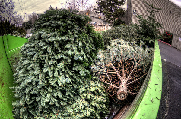 0106 xmas  My first Fisheye Friday shot for the year is of ex-Xmas trees in the condo dumpster.  These are also ex-homes of squirrels, birds and other displaced critters.  The trees have an exciting future though as mulch, which will begin the process over again. Ho Ho Ho.