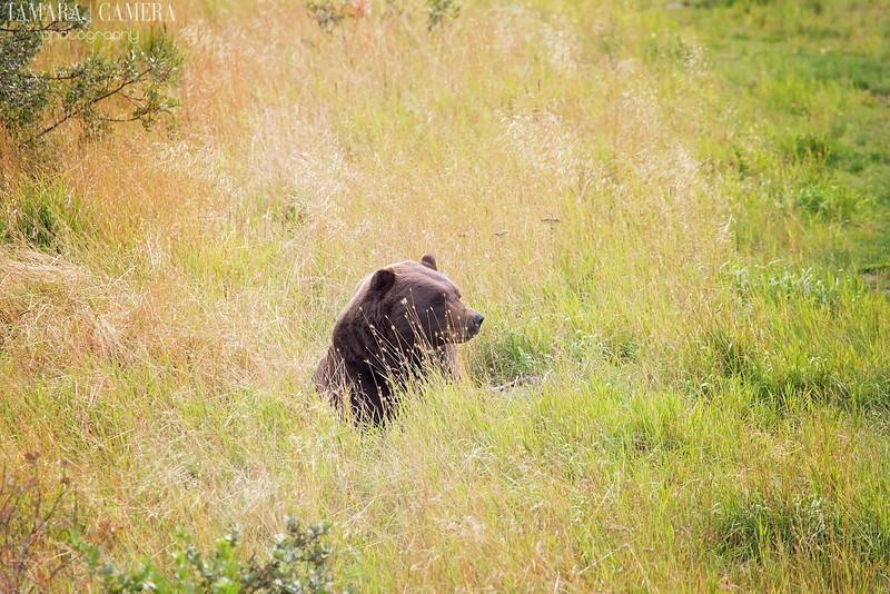 Bear-3-2.jpg