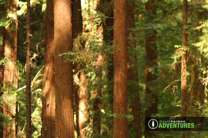 redwood_zip_1528411323261.jpg