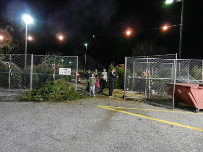 Christmas Tree Sales 2012