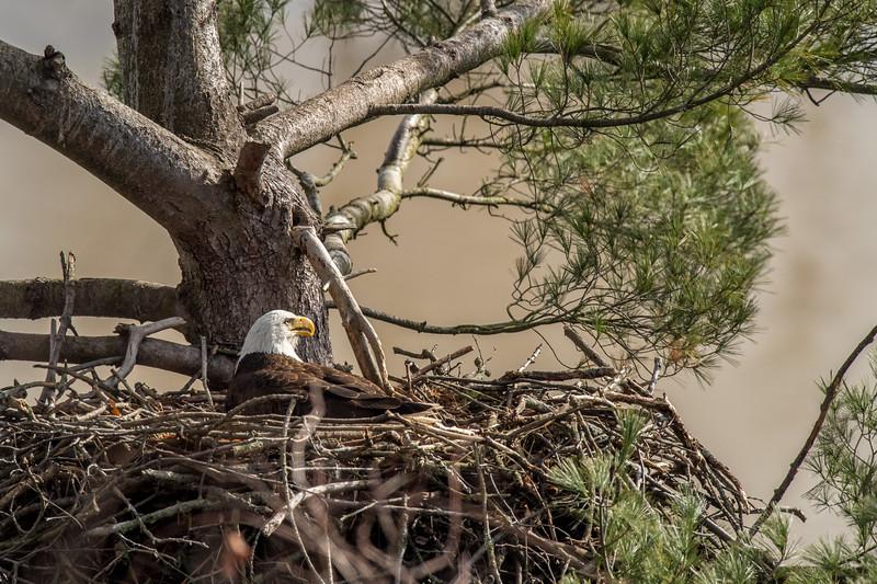 ulster-eagle-137.jpg