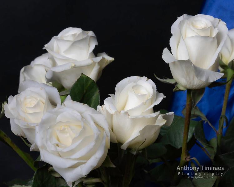Botanicals-041.jpg