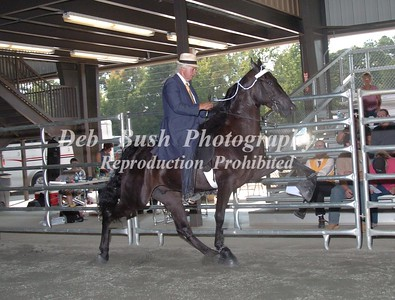CLASS 4 OPEN 2 YR OLD   rc