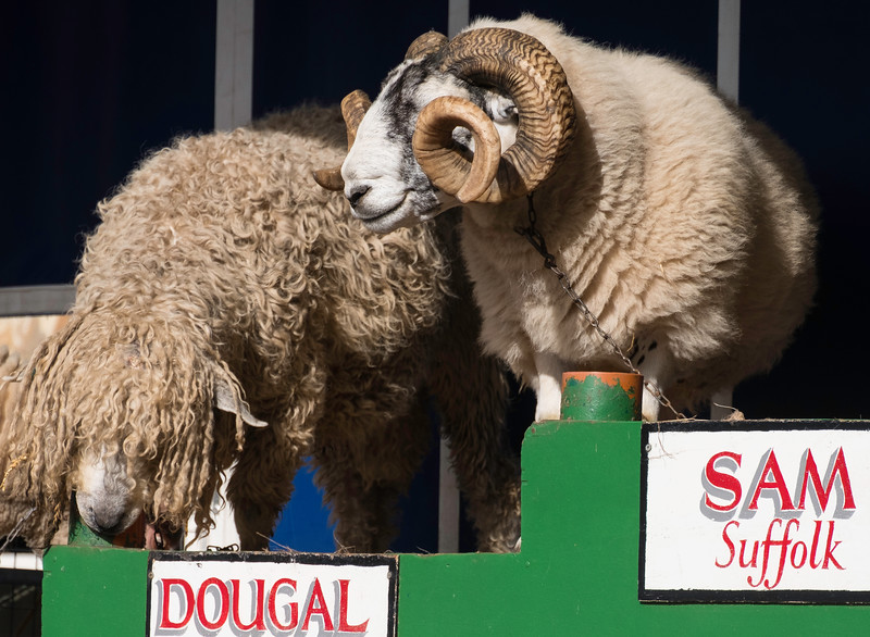 Masham Sheep Fair 2017