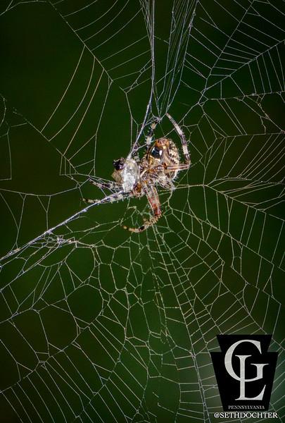 spider - green during dinner (p).jpg