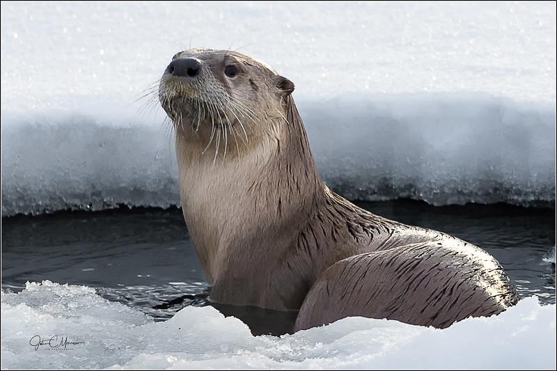 J85_2688 Otter LPW.jpg