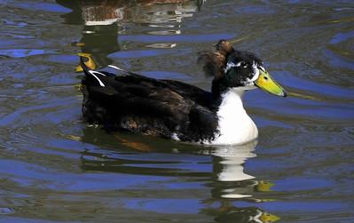furry eared duck :)