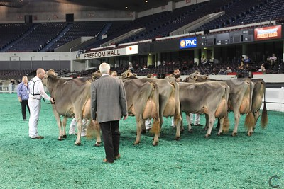 SE National Brown Swiss Senior Cow Show 2016