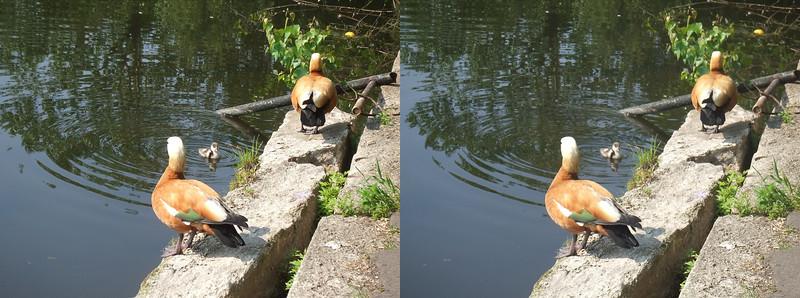 2011-05-29, Sunbathing on Pond Baikal (3D LR)