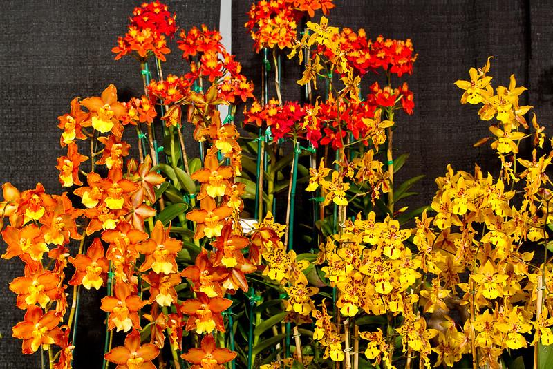 SF_Orchid_Show-40.jpg