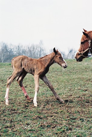 Mare and Foal Photos