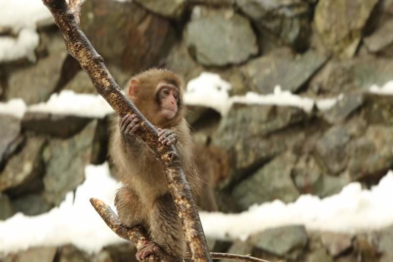 A Swinging Branch - Monkey Playground Set