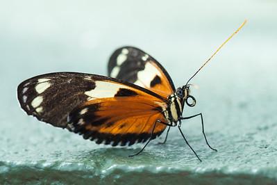 Butterfly Wonderland 2014