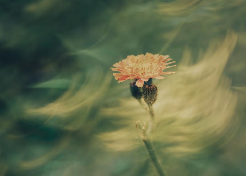 Soft Flowers II