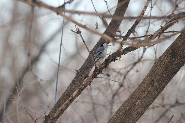 13 February 2021 Falaise Birds