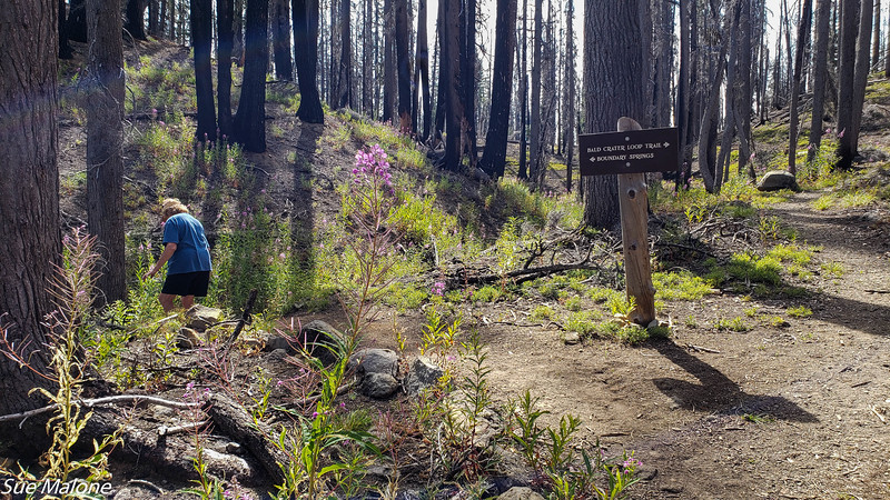 08-18-2020 Boundary Springs Hike-10.jpg