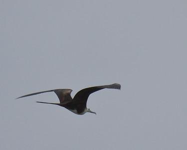 Rockport Humming Bird Festival-2010