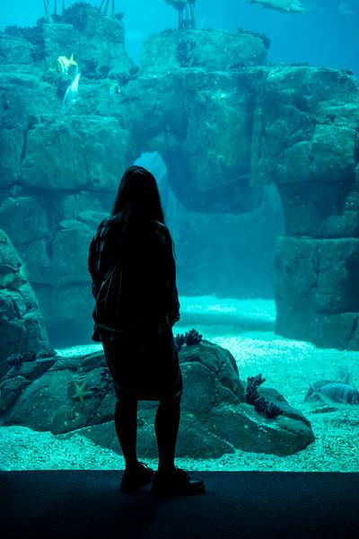 Inside the Lisbon Oceanarium