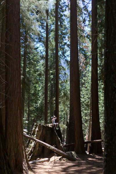 Sequoia_0156.jpg