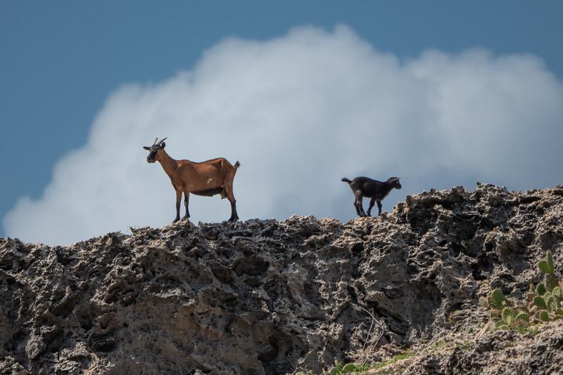Aruba-307.jpg