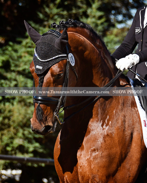 SVE 19 Hang On Oliver 4677.jpg