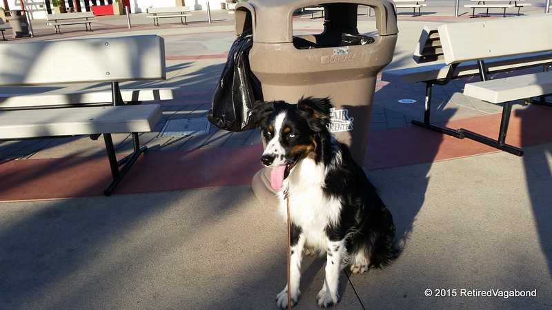 Jagger takes a breather at the OC Fairgrounds