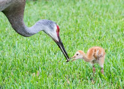 How baby birds get breakfast