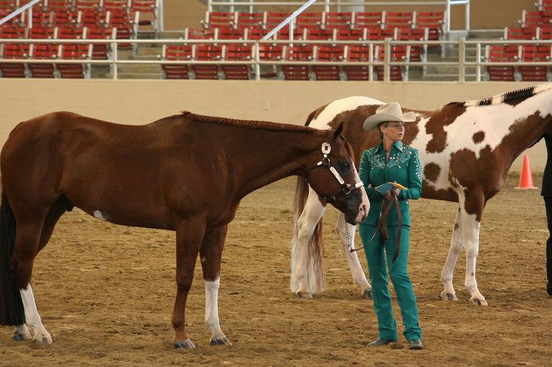 more horse show.jpg