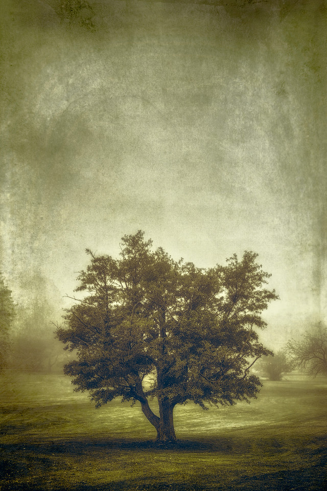 A Tree in the Fog 2 - Behind the Scenes