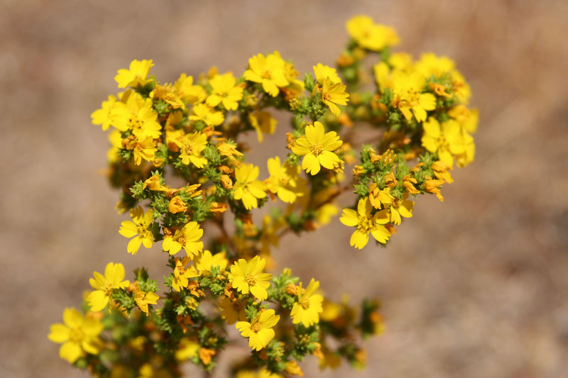 more yellow flower.jpg