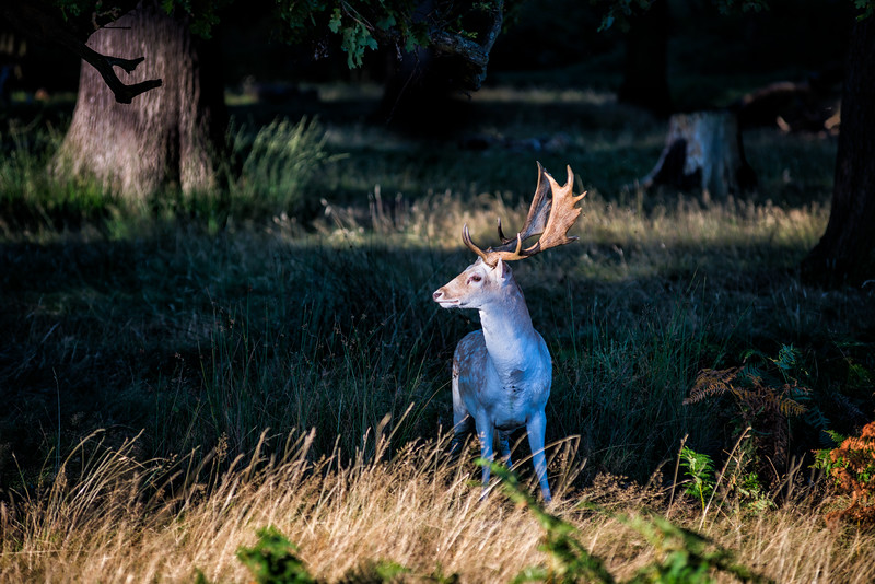 white-deer-2.jpg
