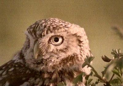 The Wise Bird