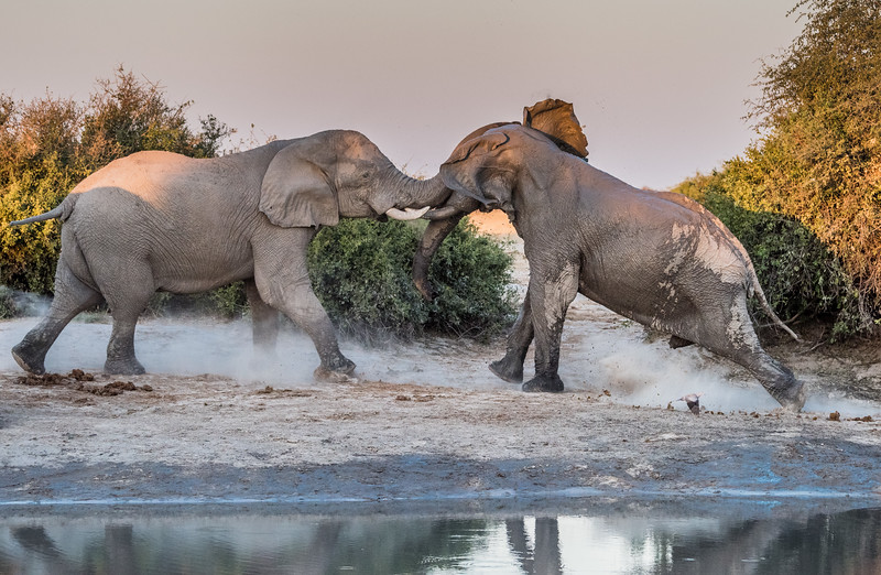 Botswana_June_2017 (4192 of 6179).jpg