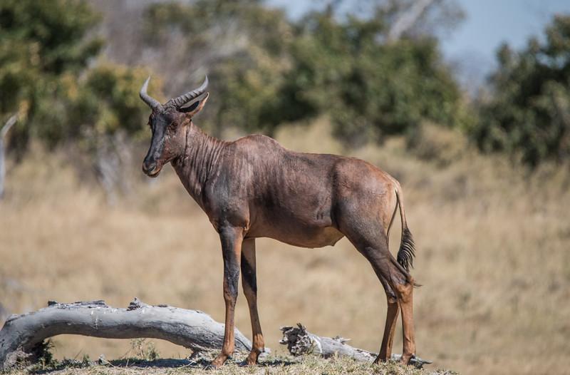 Botswana_June_2017 (1162 of 6179).jpg