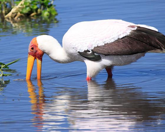Stork Tanzania 2006 2009 2010 2016