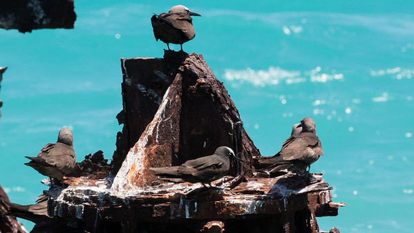 Florida Best Bird Image