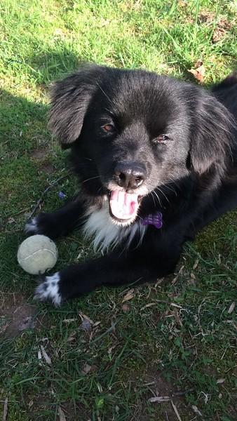 Perro.JPG