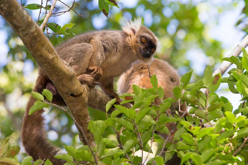 Madagascar_2013_FH0T2387.jpg