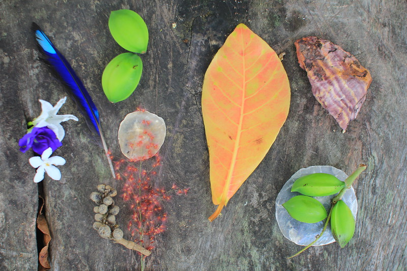 Leaf & leaves