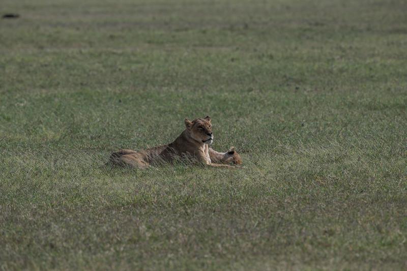 Tanzania_Feb_2018-4.jpg