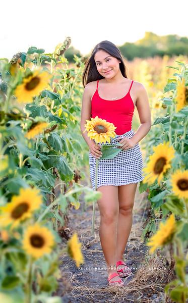 Sunflower 0367.jpg