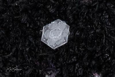 snowflakes-1643.jpg