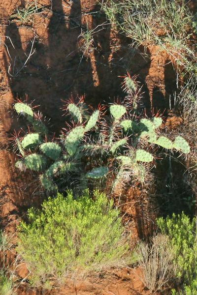cactus in Sedona, Arizona as seen from a hot air ballooon
